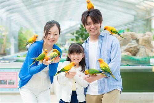 掛川花鳥園 [2021年2月4日より土日祝のみ営業、3月1日より通常営業再開]