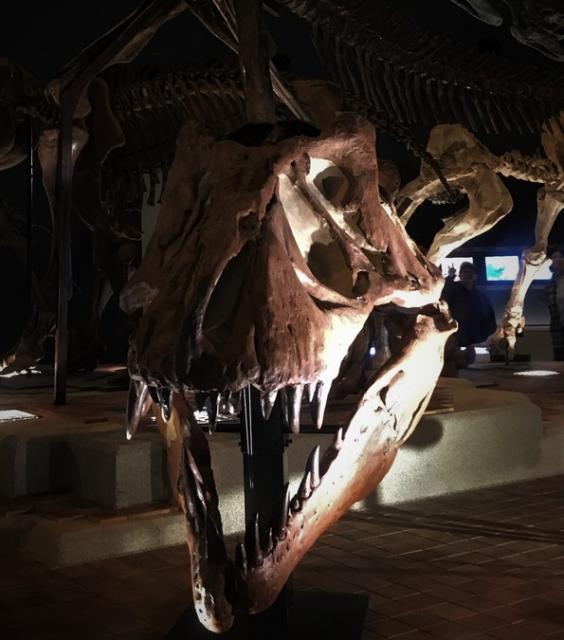 【7月1日再開館】神奈川県立生命の星・地球博物館