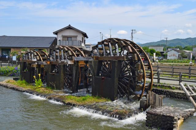 藤井養蜂場