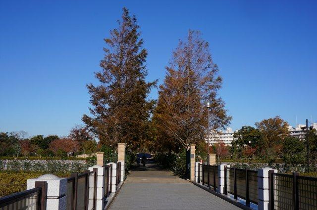 俣野公園(メモリアルグリーン)
