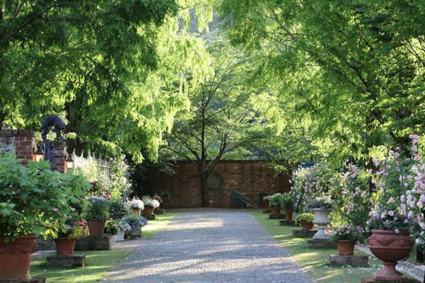 English Garden ローザンベリー多和田