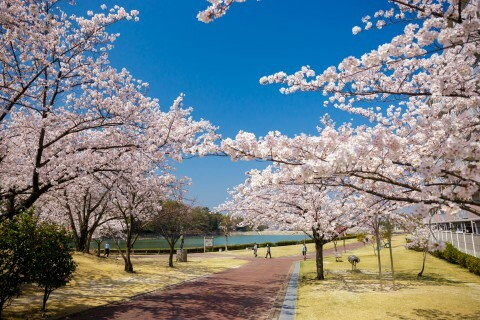 保田ヶ池公園