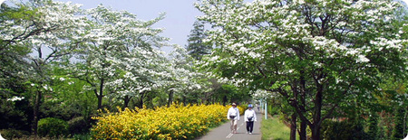 狭山・境緑道