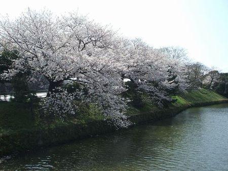 舞鶴公園(福岡城跡)