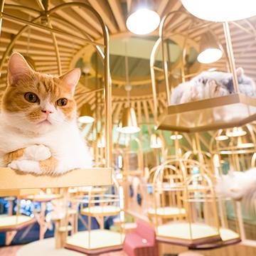 猫カフェ MOCHA(モカ) 秋葉原店
