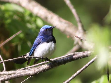南アルプス邑野鳥公園