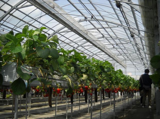 和泉市農業体験交流施設 いずみふれあい農の里