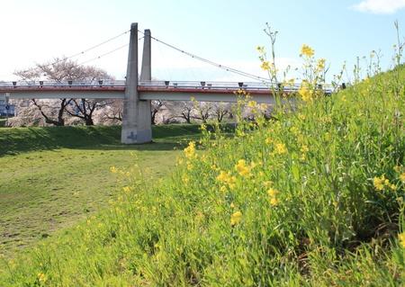 志木市いろは親水公園 河川敷