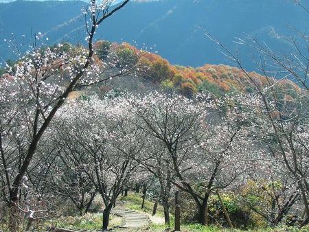 桜山公園(藤岡市)
