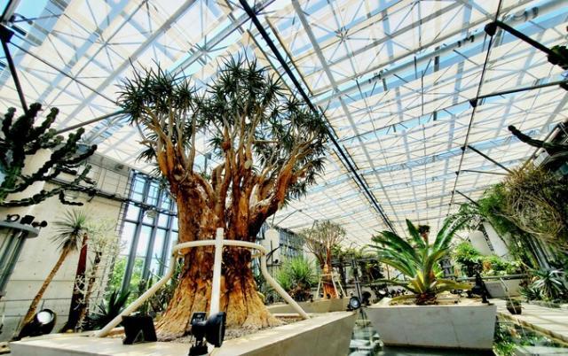 兵庫県立淡路夢舞台温室「奇跡の星の植物館」