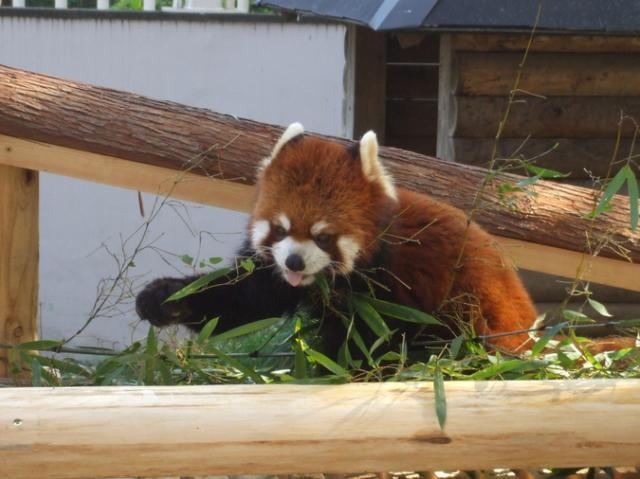 さいたま市大崎公園子供動物園