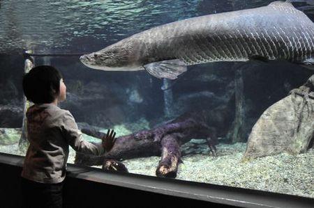 世界淡水魚園水族館 アクア・トト ぎふ