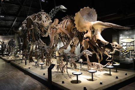 御船町恐竜博物館