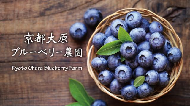 京都大原ブルーベリー農園/京都大原石窯屋