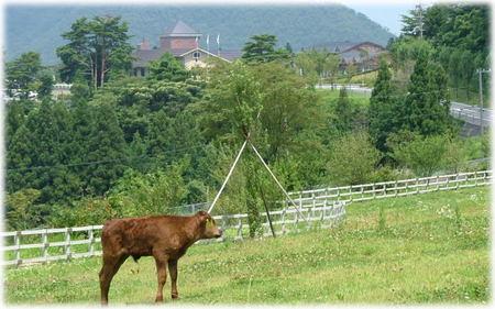 兵庫県立但馬牧場公園