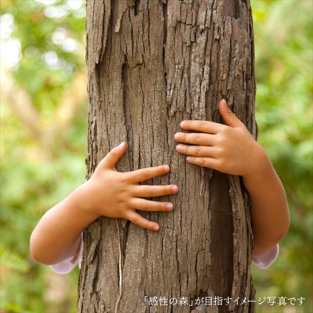 木の室内創造あそび場 感性の森