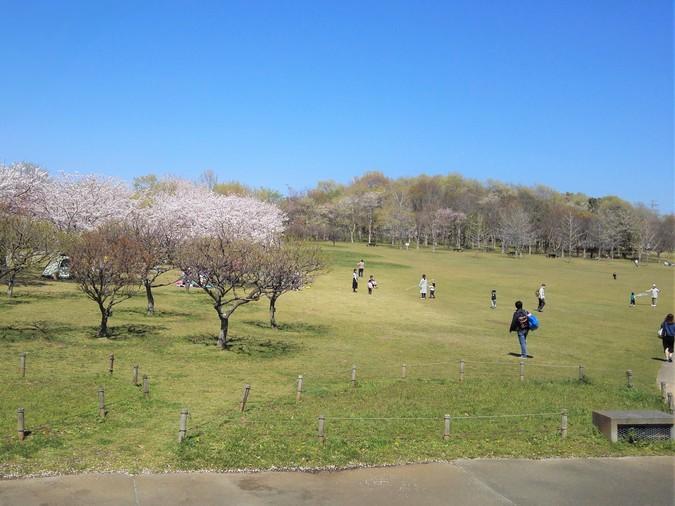 北総花の丘公園 | 子供とお出かけ情報「いこーよ」