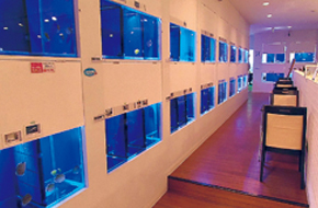 まちの水族館 アクアショップ ビビアン