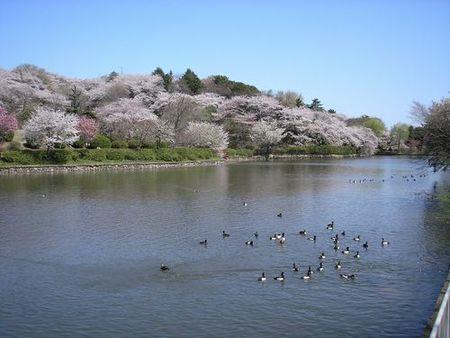 神奈川県立三ツ池公園