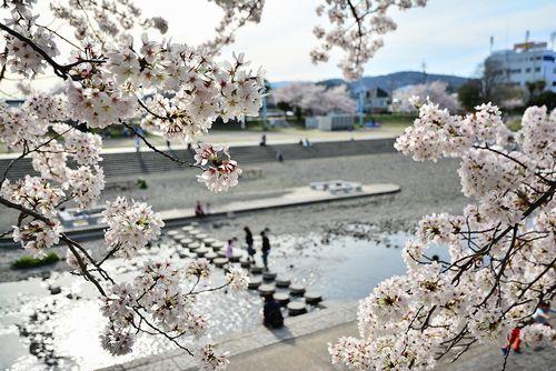 【大阪】小学生ら川でおぼれ搬送、4人が意識不明か 9歳と11歳の女児、男児(7)、男性(75)  ->画像>10枚