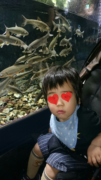 サケのふるさと 千歳水族館の基本情報