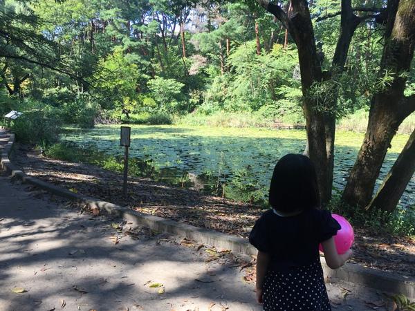 新潟のじゅんさい池公園と子供用...
