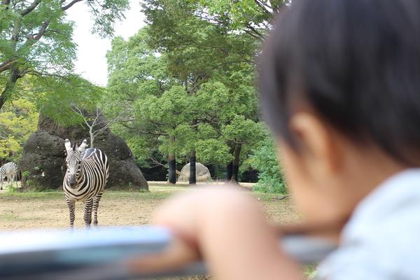 行ったスポット豊橋総合動植物園・のんほいパーク